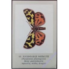 Бабочка, 1989