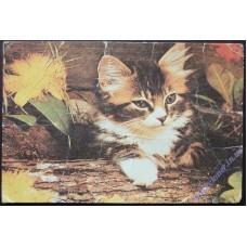 Кішка #1, 1989