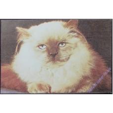 Кішка #9, 1989