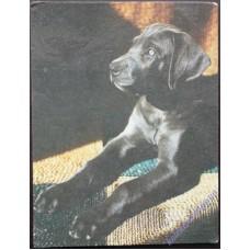 Собака #1, 1989