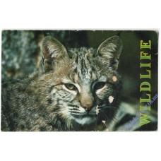 Кошка #13, 1996