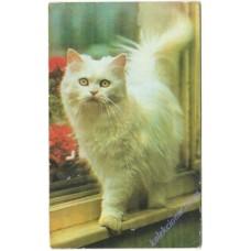 Кошка #14, 1995
