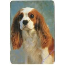 Собака #12, 1997
